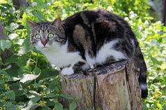 Small cat sitting curious on a tree trunk Stock Images
