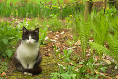 Small cat  Royalty Free Stock Images