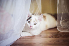Small cat sitting at home on the floor. White small cat sitting at home on the floor Stock Photo
