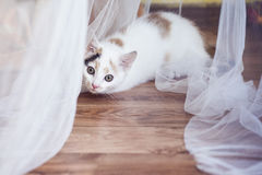 Small cat sitting at home on the floor. White small cat sitting at home on the floor Royalty Free Stock Photography