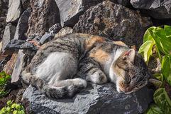 Small cat sleeping on the rocks royalty free stock photos