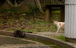 A wild cat in the park-Felis silvestris. It is a small cat species. Up to 27 subspecies are identified. The size, coat color and pattern of different subspecies Royalty Free Stock Photos