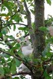 Small cat on tree closeup royalty free stock photos