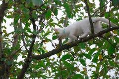 Small cat on tree closeup royalty free stock photo