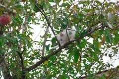 Small cat on tree closeup royalty free stock photography