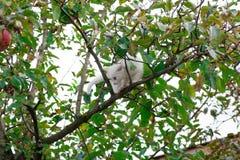 Small cat on tree closeup stock image