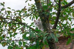 Small cat on tree closeup stock photo