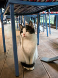 Small cat under a chair Royalty Free Stock Photos