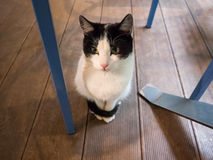 Small cat under a chair Stock Images