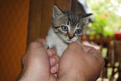 Small cat Royalty Free Stock Photo