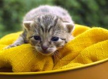 Small cat Stock Photos