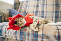 Small Cat Royalty Free Stock Photos