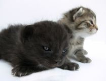 Small cats. Two cats on a white background stock images