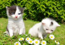 Small cats Royalty Free Stock Images