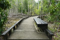 Small cement bridge pathway in the beautiful forest. Stock Photos
