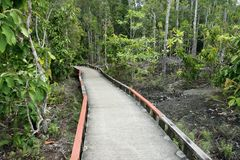 Small cement bridge pathway in the beautiful forest. Royalty Free Stock Photos