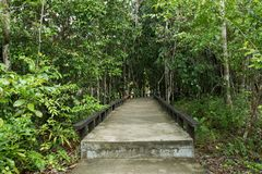 Small cement bridge pathway in the beautiful forest. Royalty Free Stock Images
