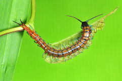 Small centipede. In the gardens Stock Images