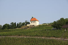 Small chapel and vineyard Royalty Free Stock Photography