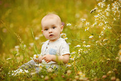 Small charming toddler boy light t-shirt sits in a field with da Stock Image