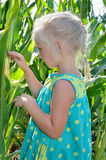 A small, cheerful girl among high, green corn Stock Images