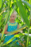 A small, cheerful girl among high, green corn Stock Photography