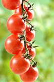 Small cherry Tomatoes Stock Image