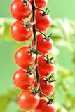 Small cherry Tomatoes Royalty Free Stock Photo
