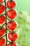 Small cherry Tomatoes Stock Photo