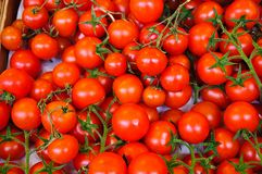 Small Cherry Vine Tomatoes Stock Photos