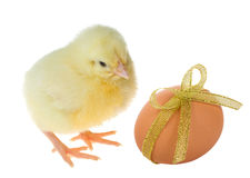 Small chick and decorated egg Stock Photos