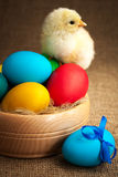 Cute small chick with easter eggs Stock Photos