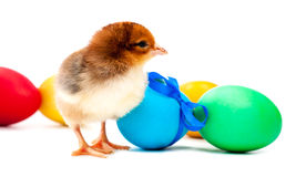 Small red chick with easter eggs.  Stock Photography