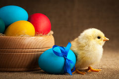 Cute small chick with easter eggs Stock Photo
