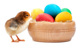 Small chick with easter eggs. isolated Stock Image
