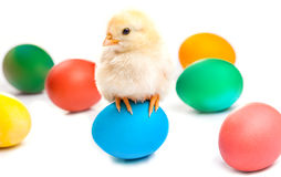 Small chick with easter eggs. isolated. Small chick with easter eggs isolated on the white Royalty Free Stock Photography