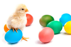 Small chick with easter eggs. isolated Stock Photography