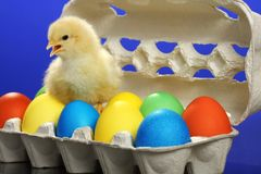 Small chicken and easter eggs Royalty Free Stock Photo