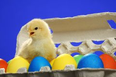 Small chicken and easter eggs Stock Photos