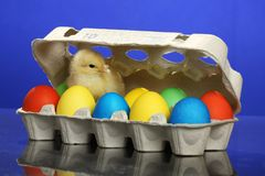 Small chicken and easter eggs Royalty Free Stock Images