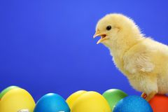 Small chicken and easter eggs Stock Photography