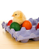 Small chicken with easter eggs. On the table - closeup Royalty Free Stock Photo