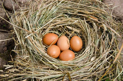 Small chicken eggs in nest of hay outdoor Stock Photos