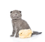 Small chicken and kitten sitting together. isolated on white Royalty Free Stock Photography