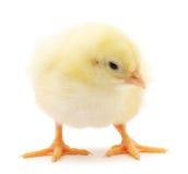 Small chicken Stock Photos