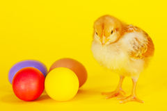 Small chicken staying with colorful Easter eggs Royalty Free Stock Images