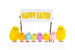Small chickens wishes Happy Easter. Royalty Free Stock Photos
