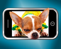 Small Chihuahua Dog Photo On Mobile Phone Stock Images