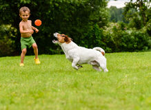 Small child boy playing with dog toss, catch and fetch game Royalty Free Stock Image