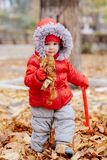 Little kid collects fallen leaves in the park. Small child collects fallen leaves in the park Royalty Free Stock Photo